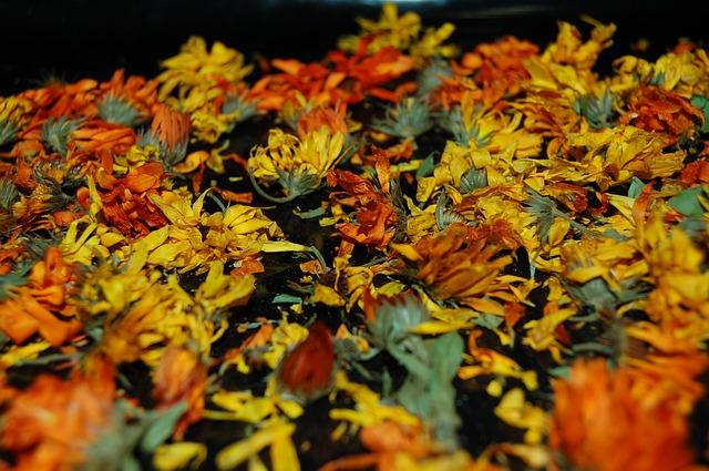 herbář léčivých rostlin