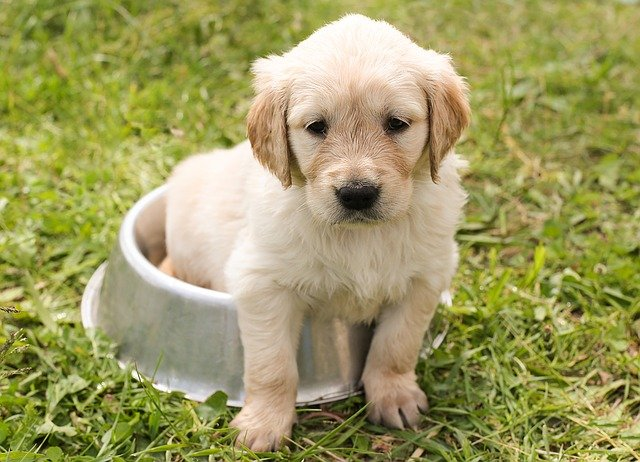 nezničitelné hračky pro psy